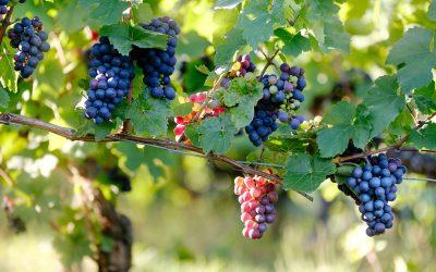 Nouvelles des vigneron en avril 2019